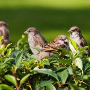 http://www.ecologiae.com/wp-content/uploads/2013/05/Uccelli-di-citt%C3%A0.1.jpg