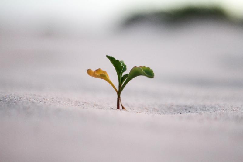 Crescere.
